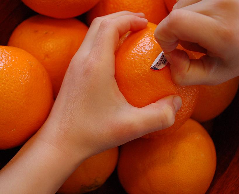 Petites mains qui enlèvent le collant d'une clémentine