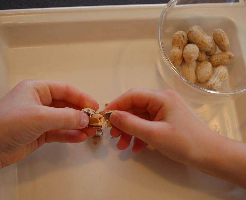 Petites mains qui enlèvent l'écale d'une arachide